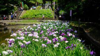 【とばた菖蒲まつり】綺麗で楽しいイベント(北九州市戸畑区)